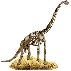Brachiosaurus Skeleton Elenco EDU37670