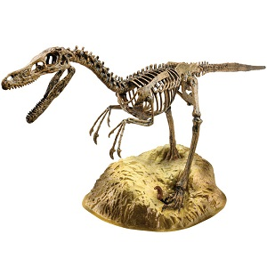 Velociraptor Skeleton Elenco EDU37671