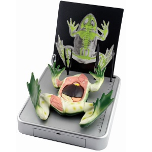 Simulated Frog Dissection Kit Elenco EDU-37307